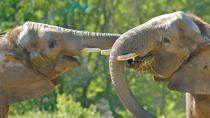 Elephant Sanctuary Tour from Kuala Lumpur , Kuala Lumpur, Nature & Wildlife