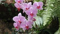 Half-Day Kota Kinabalu Orchid Tour, Kota Kinabalu, Nature & Wildlife