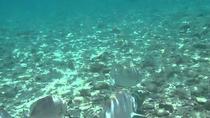 Kota Kinabalu - Tunku Abdul Rahman Marine Park Day Trip, Kota Kinabalu, Snorkeling