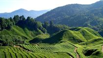 Tour in campagna per piccoli gruppi Cameron Highlands, Ipoh, Nature & Wildlife