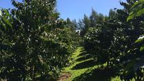 Half-Day Kula Coffee Tour, Maui, Coffee & Tea Tours