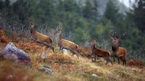 3-hour Connemara Wild Deer Viewing Safari from Letterfrack