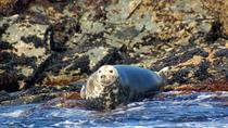 Connemara Marine Wildlife and Offshore Islands Private Sea Boat Cruise from Cleggan including ...
