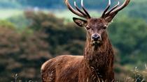 Private Connemara Wild Deer Viewing Safari from Letterfrack, Western Ireland, Nature & Wildlife