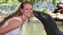 Meet the Sea Lion at Theater of the Sea, Islamorada