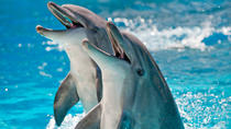 Theater of the Sea General Admission, Islamorada, Attraction Tickets