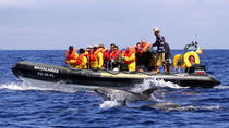 Half-Day Whale and Dolphin Watching Tour, Ponta Delgada