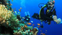 6 Dive Package at Ras Mohamed and Tiran Strait, Sharm el Sheikh, Scuba Diving