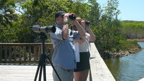 Half-Day Bird Watching Tour, Nassau