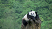 Beijing Private Tour to Beijing Panda House and Mutianyu Great Wall, Beijing, Private Sightseeing ...