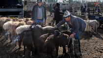 Private Day Tour to Kashgar Livestock Market and Sunday Bazaar, Kashgar, Market Tours