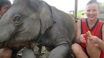 2-Day at Elephant Retirement Park with Homestay and Meals in Chiang Mai, Chiang Mai