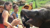 2-Day Elephant Retirement Park Package including Homestay and Meals, Chiang Mai, Nature & Wildlife