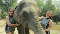 Full-Day Visit to Elephant Retirement Park in Chiang Mai with Buffet Lunch, Chiang Mai, Nature &...