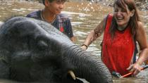Full-Day Visit Without Riding to Elephant Retirement Park including Buffet Lunch, Chiang Mai,...
