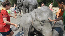 Half-Day Visit to Elephant Retirement Park in Chiang Mai, Chiang Mai, Nature & Wildlife