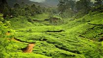 6-Night Private Kerala Tour from Kochi, Kochi