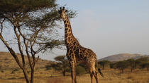 14 Day Tanzania Private Family Safari: Serengeti Ngorongoro Crater, Masai Village, Lake Manyara,...
