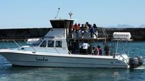 Big 5 Sea Safari in Walker Bay from Gansbaai, Hermanus, Dolphin & Whale Watching