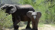 4-Day Kruger National Park, Johannesburg, Attraction Tickets