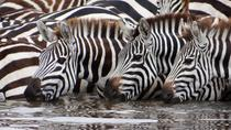 4-Day Serengeti & Ngorongoro Safari, Arusha, Multi-day Tours