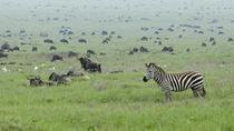 5-Day Highlights of Tanzania Safari, Arusha, Multi-day Tours