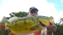 6-hour Miami Peacock Bass Fishing Trip, Miami, Fishing Charters & Tours