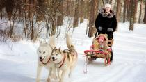 St. Petersburg Winter Peterhof Tour and Malamute Sledding, St Petersburg, Private Sightseeing Tours