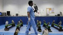 Abu Dhabi Falcon Hospital Tour Educational Tour About the Falcons With Transfers, Abu Dhabi, Day ...