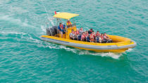 Explore Abu Dhabi Sightseeing by Yellow Boat -Cruise Along the Persian Gulf, Abu Dhabi, Day Cruises
