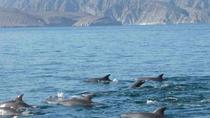 Full Day Oman Musandam Khasab Tour by Traditional Dhow Cruise-Dolphin watching, Dubai, Dhow Cruises