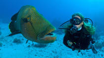 Tiran Island Full Day Sea Cruise with Snorkeling and Diving with Lunch and More, Sharm el Sheikh,...