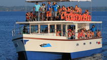 Whale Watching Cruise from Galle, Galle, Dolphin & Whale Watching