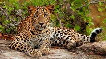 Yala National Park Adventure from Galle, Galle, Safaris