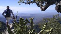 Sierra de la Laguna Biosphere Reserve Hike from Todos Santos, Todos Santos, Hiking & Camping