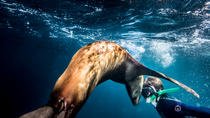 Swimming and Snorkeling in Area with Sea Lions in Sea of Cortez, Todos Santos, Snorkeling