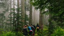 Wild Edible Plants: Rainforest Walking Tour with Lunch, British Columbia, Walking Tours