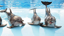 Dolphin Show, Sharm el Sheikh, Day Cruises