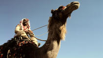 Two Days Camel Safari, Dahab, Overnight Tours