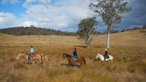 2-Hour Horse Ride in Howes Valley, New South Wales, Nature & Wildlife