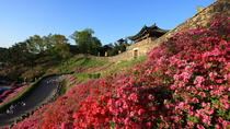 Western Korea 4-Day Tour Including Jeonju and Yeosu , Seoul, Multi-day Tours