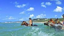 Horse Swimming Ride from Rainbow Beach, Rainbow Beach, Horseback Riding