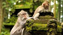 Halfday Tour: Ubud Monkey Forest and White Herons Colony Watching, Ubud, Nature & Wildlife