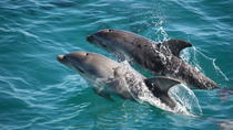 3-Hour Dolphin and Seal Sightseeing Cruise, Mornington Peninsula, Mornington Peninsula, Day Cruises