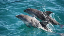 Mornington Peninsula Dolphin and Seal Cruise from Sorrento, Mornington Peninsula, Dolphin & Whale ...
