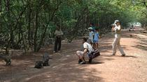 Sai Gon: Can Gio Biosphere Reserve and Monkey Island tour, Ho Chi Minh City, Nature & Wildlife