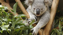 Healesville Sanctuary and Yarra Valley Day Trip from Melbourne, Melbourne, Day Trips