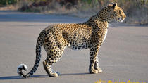 4-Day Kruger National Park Safari from Johannesburg, Kruger National Park, Multi-day Tours
