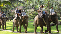 Bali Elephant Safari Park with Buffet Lunch, Bali, Nature & Wildlife