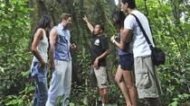 Full-Day Trekking Tour with Taro and Tegalalang from Ubud , Ubud, Hiking & Camping